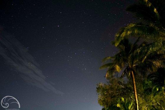 Photo: stars & palm trees in Queensland, Australia